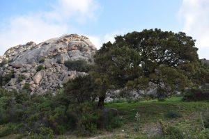 albero-piagato dal-vento